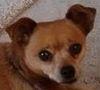 Shirebound: Pippin gaze