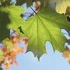 omi_ohmy: Leaf