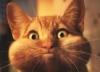 milma userpic