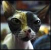 lemurrra userpic