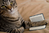 кыска с книжкой