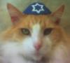 кот-еврей рыжий