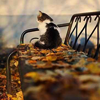 lotos79: cat on a bench