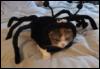 кот, паук