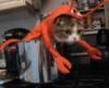 cat_barcelona userpic