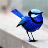 very blue bird
