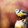 Animal: Fat Birdie