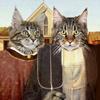Американские котики