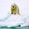 arktis_experte userpic