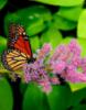 бабочка (марины)