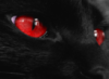 ojos, rojos, gato