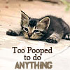 ~Lirpa~: Kitty: Pooped