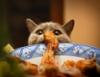 кот и тарелка