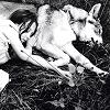 girl & wolf