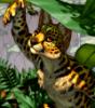 """Spottacus """"Spotti"""" Cheetah"""