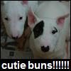 mangacat201: cutie buns