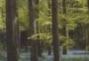 Scotland bluebells
