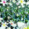bani_chan90