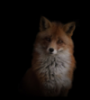 fox_alina userpic
