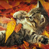 kitten in leaves