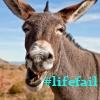 #lifefail