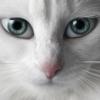 missi68 userpic