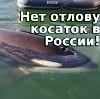 maleorca userpic