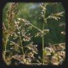 Лэйтэнно: трава