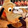 Stock: Pluto & pup