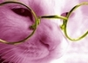 rasp_berry_cat userpic