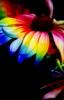 rainbow daisy skirt