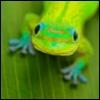 зеленая морда