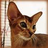 Ashba_cat_1
