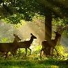 Oshun: Deer forest fairytale
