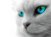 santana_luv_3 userpic