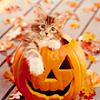 jya_bd_cp_ttgb: Halloween