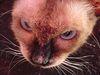 Кіт-ненависть