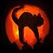 helloween cat