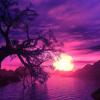 arctic_violet
