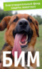 fond_bim