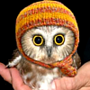 frozenemerald userpic