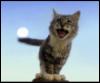 moon_cat2