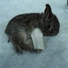 broken bb bunny