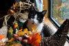 jenny at thanksgiving