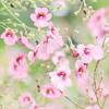 aromanta userpic