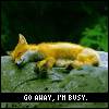 I'm busy credit to The Chamber of Icons