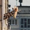 pyatna_girafa userpic