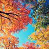 Осеннее разноцветье