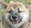 Собака-мечтака