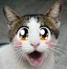 удивлённый кот